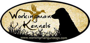 Working Man Gun Dogs Irish and British Labrador